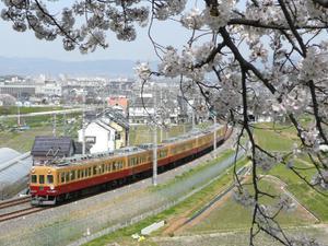 Sakura1929